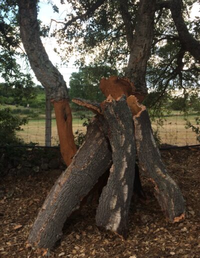 Homeland of the Cork Trees