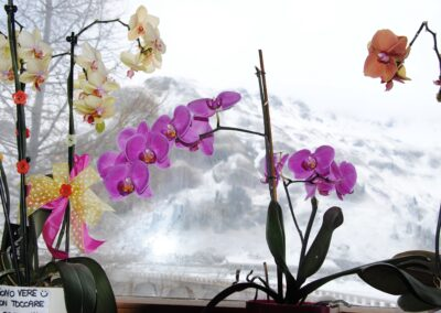 Best position for Orchids